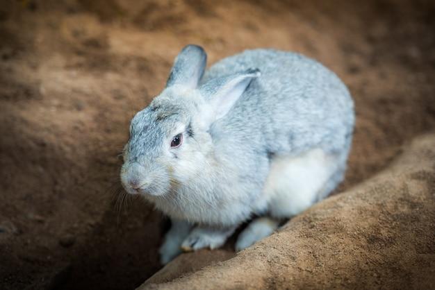 Leuk grijs konijn op de grond
