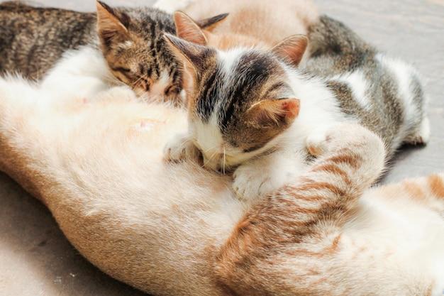 Leuk kat die kattenmelk dicht omhoog eten