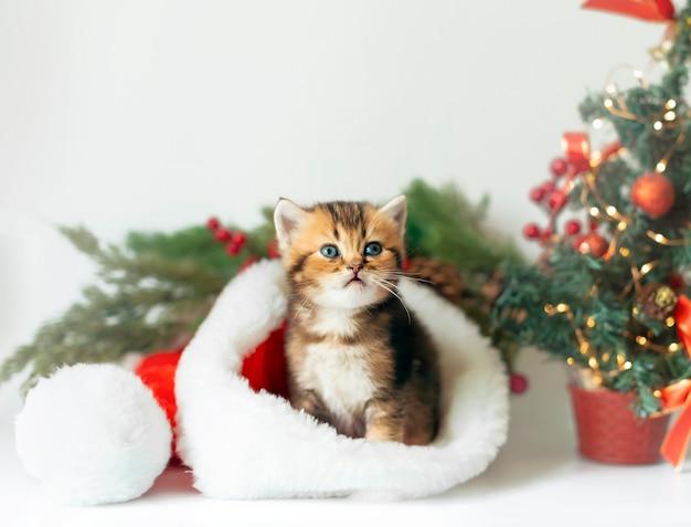 Leuk katje in een kerstmanhoed op de achtergrond van een kerstboom