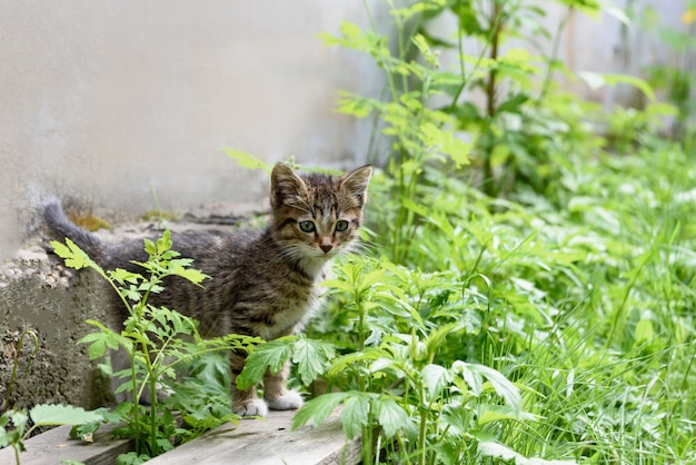 Leuk katje in het groene gras