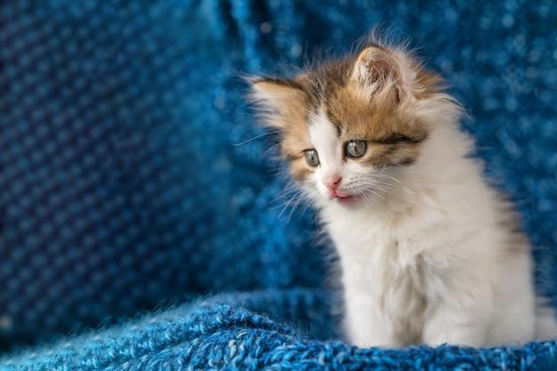 Leuk katje kijkt met verbazing op blauw