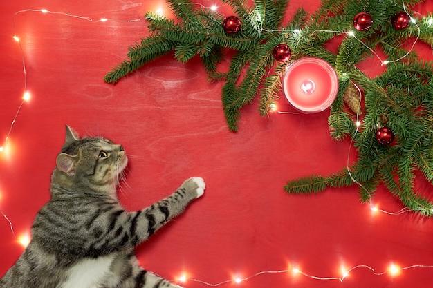 Leuk katje liegen en kijken naar kerstboom met rode ballen en lichten