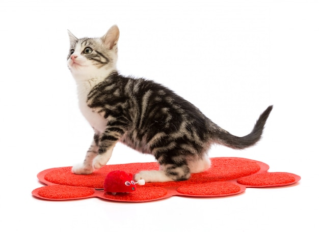 Leuk katje met rode loper en speelgoed