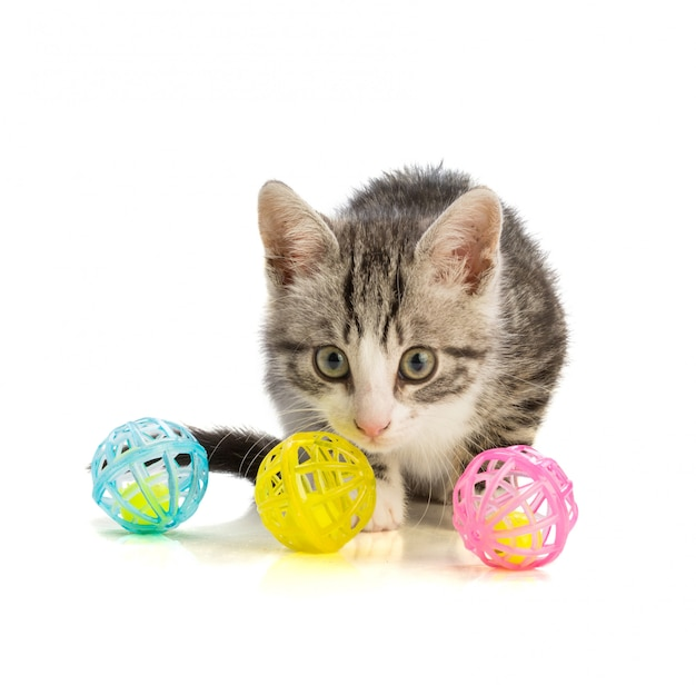 Leuk katje met wat speelgoed