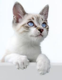 Leuk katje over wit