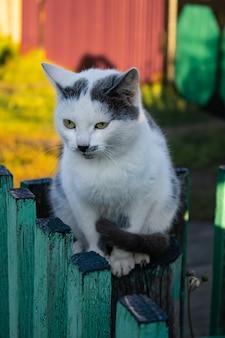 Leuk katje zit op houten boerderijomheining