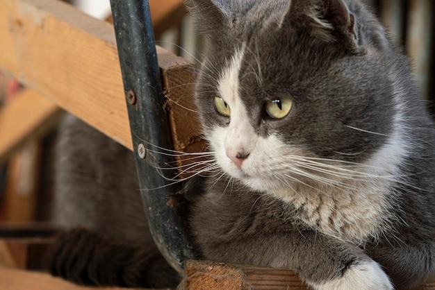 Leuk kattenportret dat neerkijkt met een nieuwsgierige uitdrukking