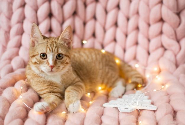Leuk klein gemberkatje dat in zachte pastelkleur roze merinowol gigantische gebreide deken legt, c.