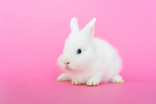 Leuk klein harig konijnkonijntje