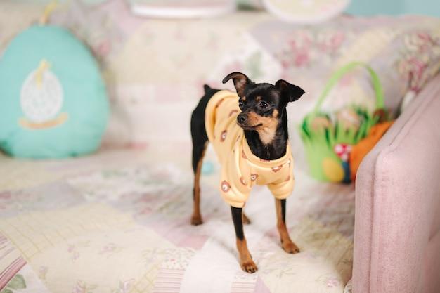 Leuk klein huisdier thuis op bankhond in gele sweater ei-vormig hoofdkussen pasen