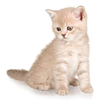 Leuk klein katje dat op witte achtergrond wordt geïsoleerd
