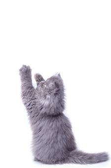 Leuk klein katje op zijn achterpoten