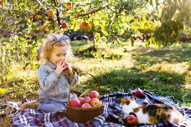 Leuk klein meisjeskind dat rijpe organische rode appel eet in apple orchard met mandappelen in de herfst
