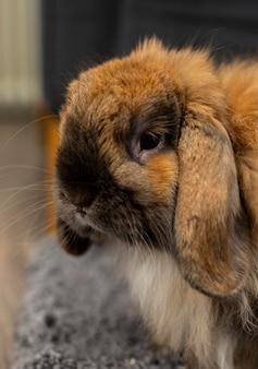 Leuk konijn binnenshuis