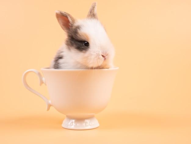 Leuk konijntje in kop. de jonge mooie zitting van het de baby bruine konijn van konijntjespasen in een witte koffiekop op geel.