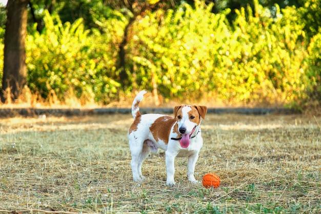 Leuk meisje speelt met haar hond in het park