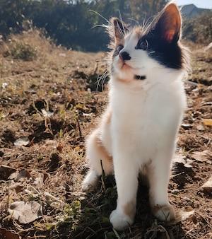 Leuk nieuwsgierig verdwaald katje in de herfstweide