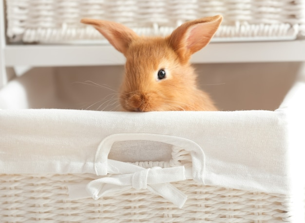 Leuk pluizig konijntje in rieten mand thuis