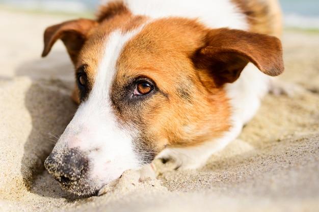 Leuk portret van weinig hond die van tijd in openlucht genieten