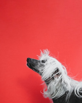 Leuk puppy dat omhoog met exemplaar ruimteachtergrond kijkt