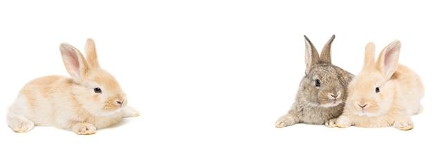 Leuk rood en grijs pasen-konijnkonijntje dat op witte achtergrond wordt geïsoleerd