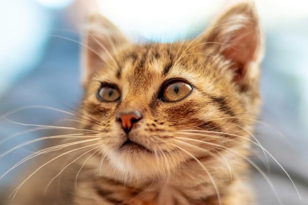 Leuk rood gestreept katje van dichtbij met een interessante blik van dichtbij