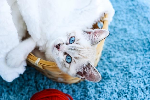 Leuk schattig tabby katje met blauwe ogen in de buurt van ballen en mand