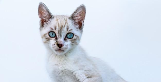 Leuk schattig tabby katje met blauwe ogen