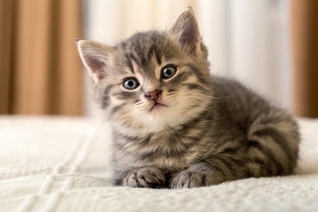 Leuk tabby katje ligt thuis op witte plaid