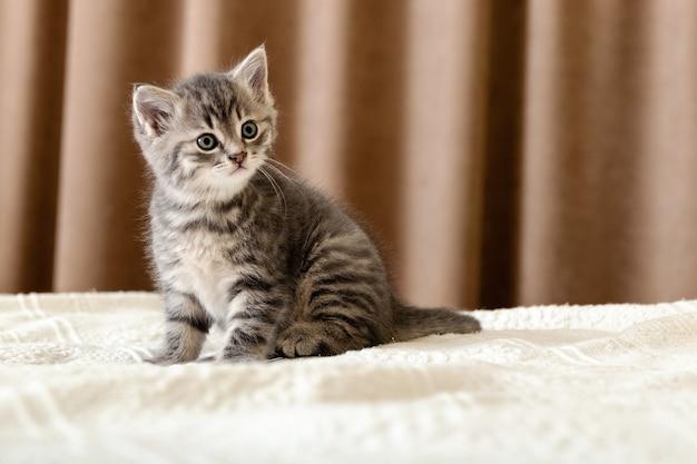 Leuk tabby katje zittend op een witte plaid thuis