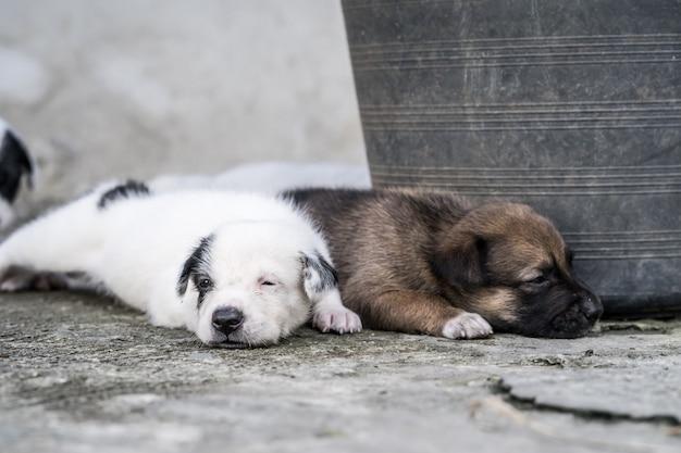 Leuk thais puppy dat en op de grond ligt speelt