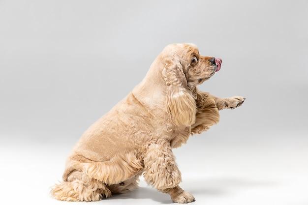 Leuk verzorgd pluizig hondje