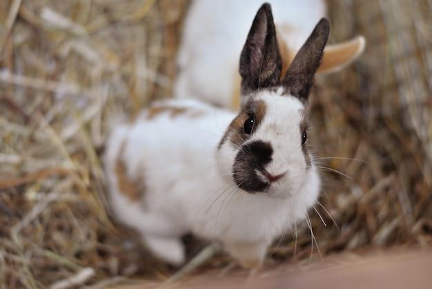 Leuk wit en zwart konijn