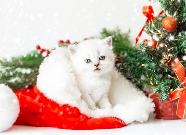 Leuk wit katje met blauwe ogen zit in een kerstmuts
