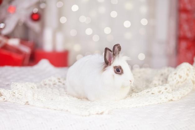 Leuk wit konijn, konijntje tegen de achtergrond van feestelijk versierde dennenboom. gelukkig wintervakantie concept