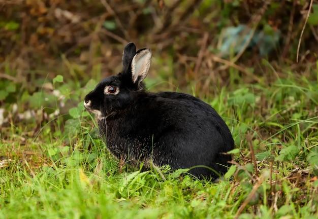 Leuk zwart konijn in het bos.