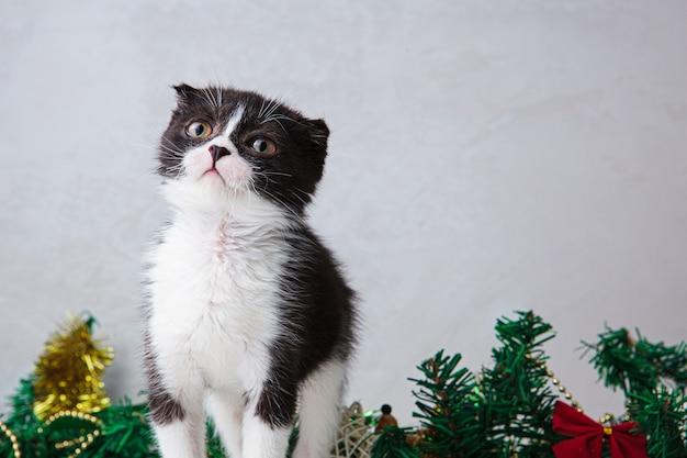 Leuk zwart-wit katje met een kerstslinger.