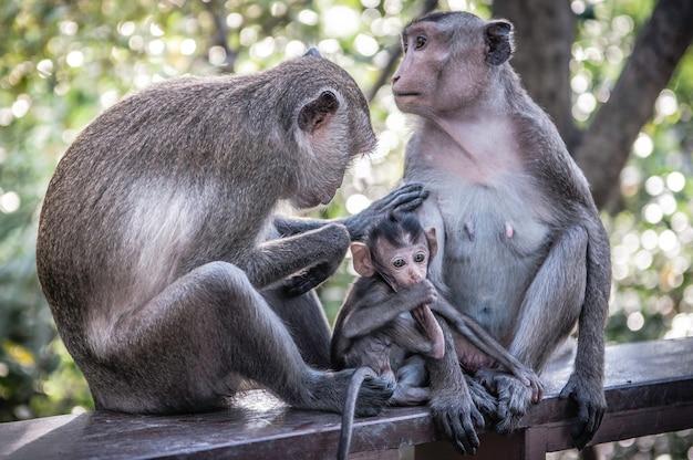 Leuke apen leven in een natuurlijk bos van thailand.