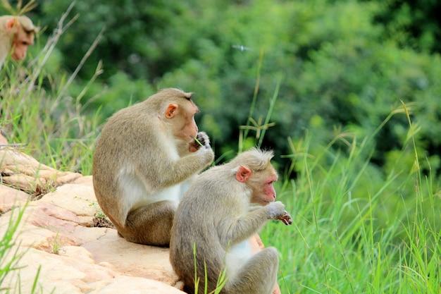 Leuke apen met familie. aap close-up. apen die in het wild leven.