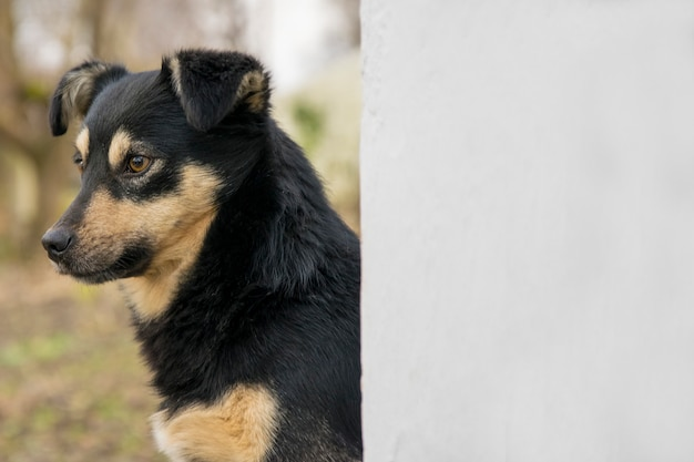 Leuke bastaarde hond in openlucht. close-up van zwart gemengd rassen van een hond dichtbij muur