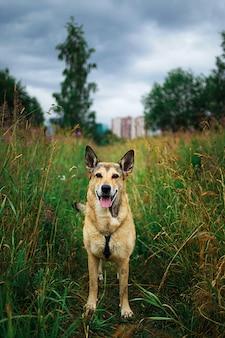 Leuke bastaardhond die zich op groen gras bevindt