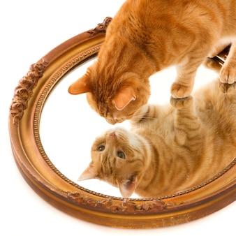 Leuke binnenlandse gemberkat die nieuwsgierig naar zijn eigen reflectie in een spiegel op een wit oppervlak kijkt