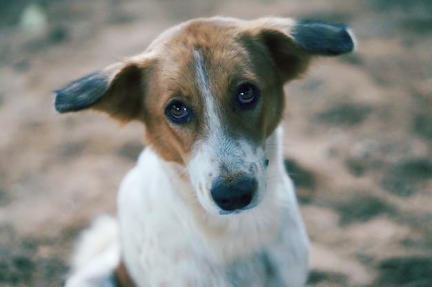 Leuke bruine en witte hond