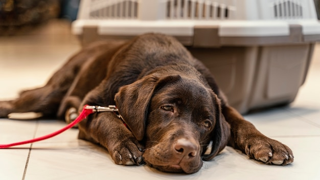 Leuke bruine hond bij de dierenwinkel
