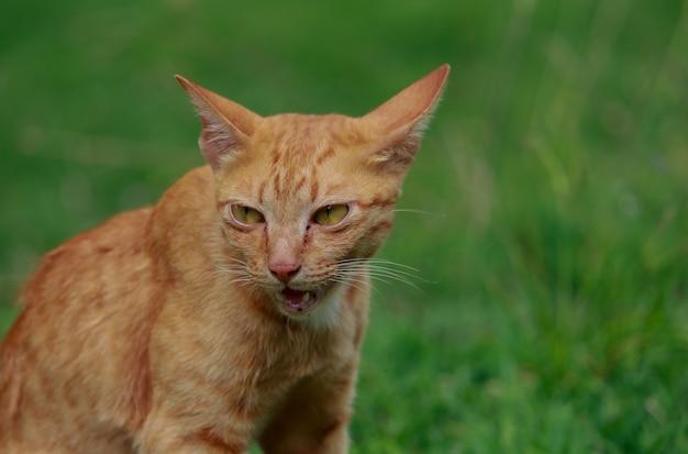 Leuke bruine kat op het gazon