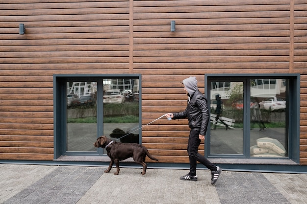 Leuke bruine labrador die met leiband zijn eigenaar trekt terwijl allebei zich langs houten muur van modern plattelandshuisje beweegt