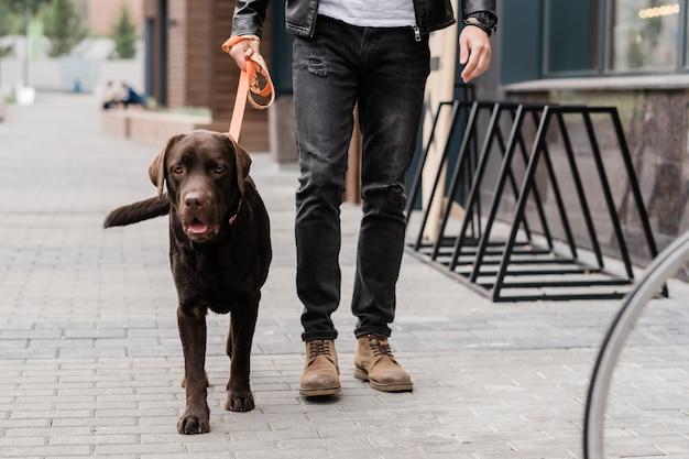 Leuke bruine rashond en zijn eigenaar die door de straat van de stad lopen terwijl ze 's ochtends samen chiiling