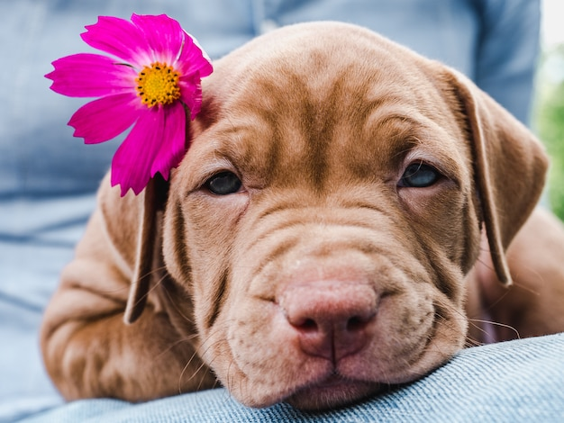 Leuke, charmante puppy en een heldere bloem