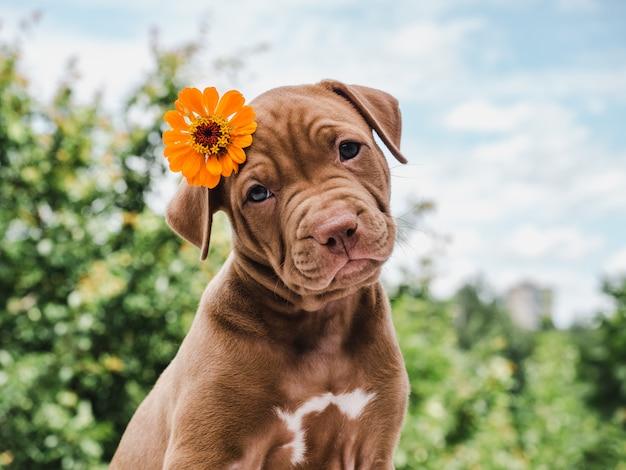 Leuke, charmante puppy, zittend op een zacht tapijt