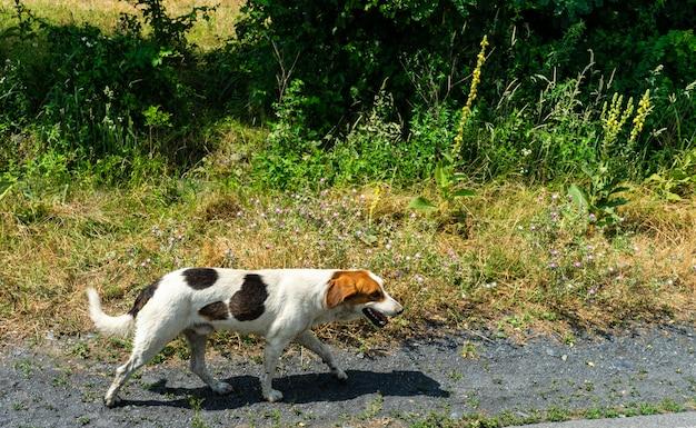 Leuke dakloze hond